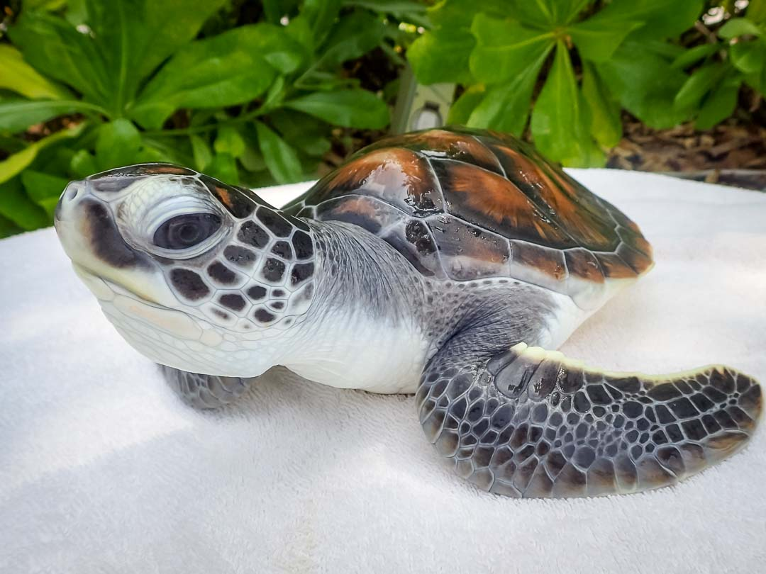 Conservation in the Maldives - The Maldives Expert