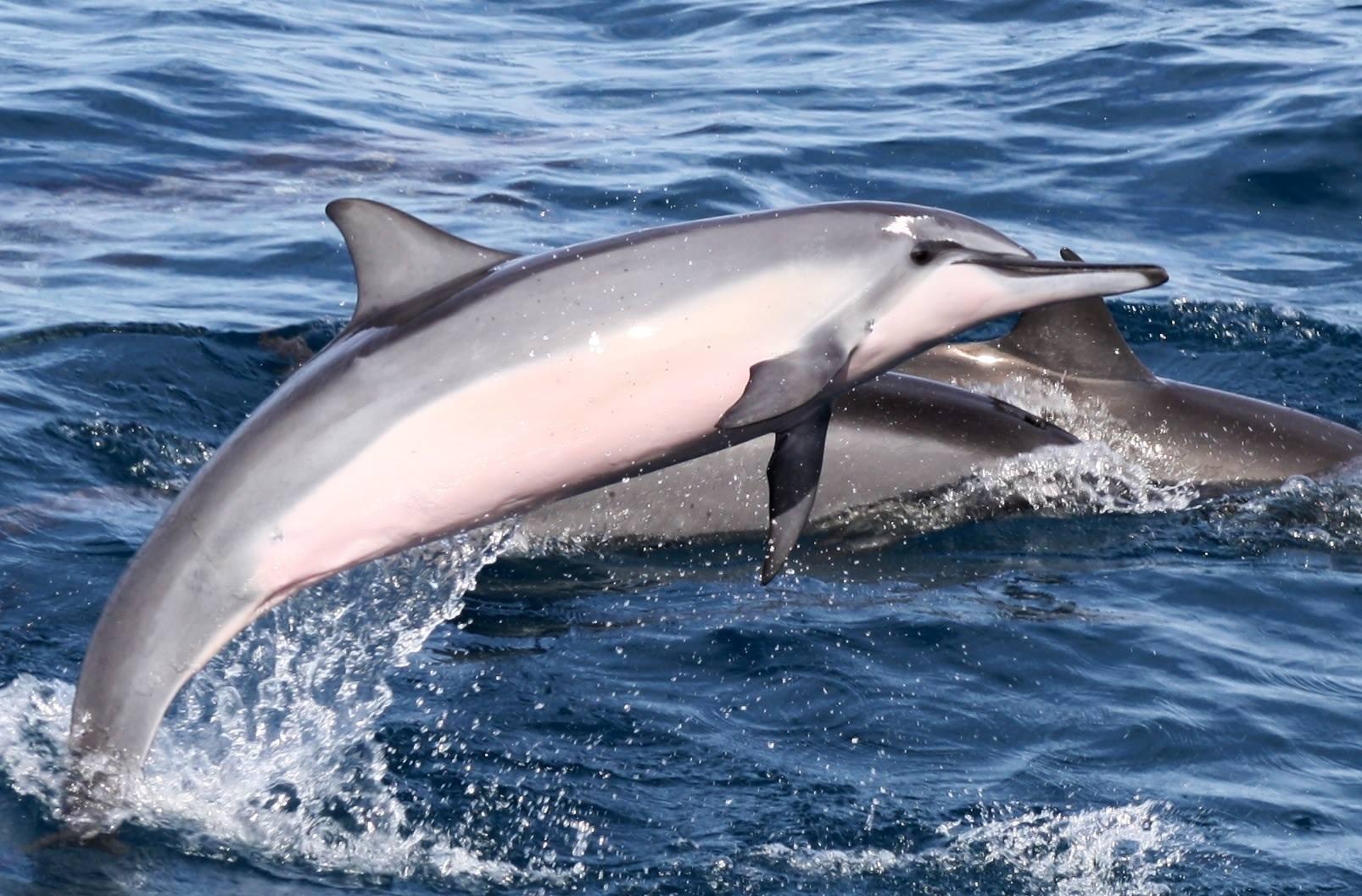 Wildlife of the Maldives - The Maldives Expert